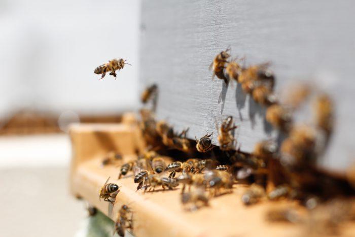 Interne Unternehmenskommunikation wie in einem Bienenstock. Bild: Unsplash/Damien Tupinier