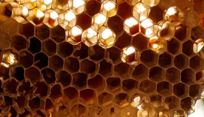 Schutz vor Honeypots